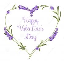 Lý do nên tặng Lavender (hoa Oải Hương) vào ngày Valentine