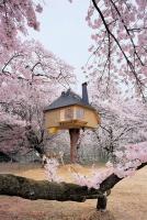 Ngôi nhà trên cây tuyệt đẹp của thế giới
