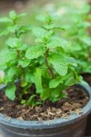 Cây trồng sẽ có hương thơm nhất, sạch cửa, mát nhà