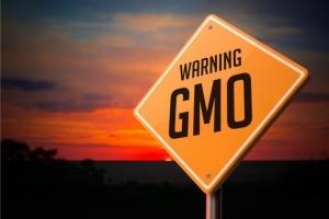 Thực phẩm biến đổi gen bạn nên biết