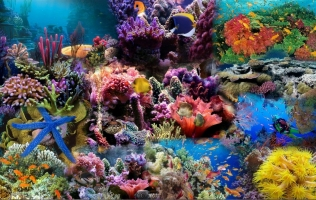điểm lặn biển ngắm san hô đẹp nhất ở Việt Nam cho mùa hè này