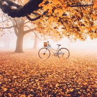 Bài thơ hay viết về khoảnh khắc giao mùa chuyển từ Thu sang Đông