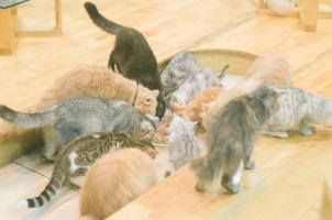 Top 4  quán cafe mèo độc đáo nhất Hà Nội