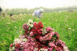 Loài hoa đẹp và phù hợp nhất cho ngày chụp kỷ yếu