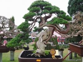 Cây bonsai đẹp nhất thế giới