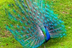 Loài chim đẹp nhất trên thế giới