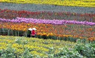 Làng hoa nổi tiếng quanh Hà Nội