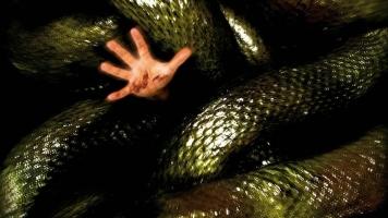 Bộ phim về loài rắn hay nhất bạn nên xem