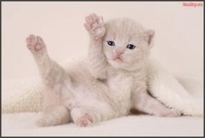 Chú mèo lười biếng đáng yêu nhất mọi thời đại.