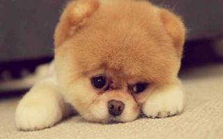 Hình ảnh đáng yêu nhất quả đất của các bé cún
