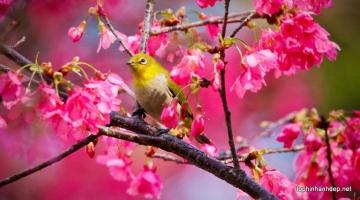 Bài hát về mùa xuân hay nhất mọi thời đại