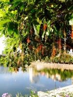 Bài thơ hay về những ngày nắng nóng ở Hà Nội