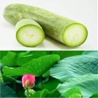 Top 8  công dụng chữa bệnh thần kỳ của quả bí đao