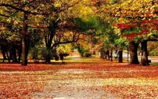 Top 10 Bài văn tả cảnh mùa thu hay nhất