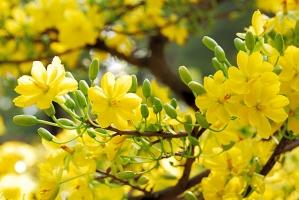 Top 10 Bài văn tả cảnh mùa xuân hay nhất