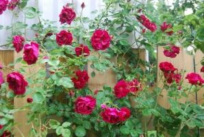 Bài văn tả cây hoa hay nhất