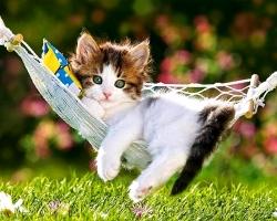 Bài văn tả con mèo hay nhất