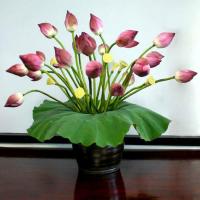 Bài văn tả hoa sen hay nhất