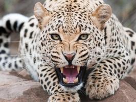 Loài động vật nhanh nhất thế giới