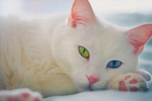 Bé mèo có mắt hai màu đáng yêu nhất thế giới