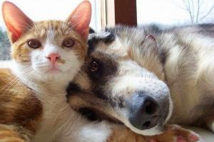 Bệnh thường gặp ở chó mèo và cách phòng trị bệnh