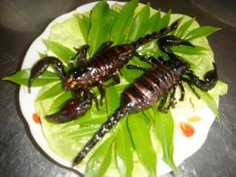 Món ăn côn trùng nổi tiếng kinh dị trên thế giới