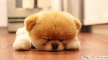 Bức ảnh của động vật sẽ khiến bạn giảm  stress.