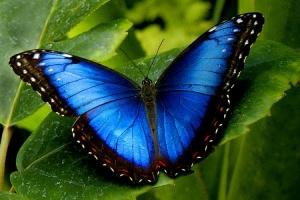 Loài côn trùng lớn nhất thế giới hiện nay có thể bạn muốn biết