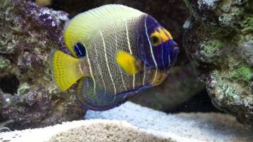 Loài cá đẹp nhất thế giới