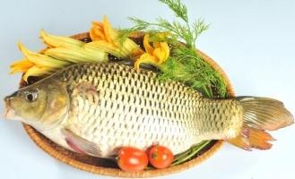 Loại cá giúp con thông minh các mẹ cần quan tâm