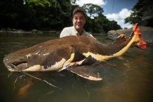 Loài cá khổng lồ đang có nguy cơ bị tuyệt chủng