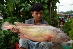 Loại cá quý hiếm và đắt nhất Việt Nam