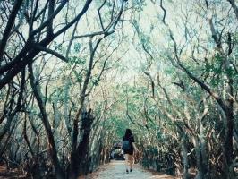địa điểm  chụp ảnh đẹp ở Huế dành cho các tín đồ mê sống ảo