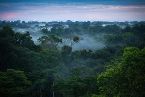 động vật quái dị trong rừng rậm Amazon