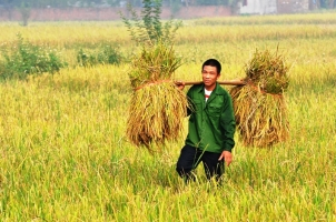 Website về nông nghiệp uy tín nhất Việt Nam