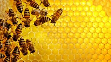 Cách nhận biết mật ong thật và ngon