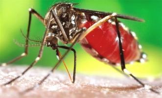 Căn bệnh lây truyền do Muỗi cần cảnh giác nhất