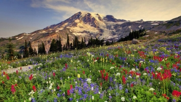 Thiên đường hoa đẹp nhất trên thế giới bạn không thể bỏ qua
