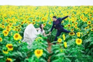 Cánh đồng hoa đẹp nhất Việt Nam thu hút dân phượt về chụp hình dịp cuối năm