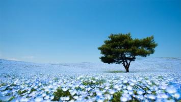 Cánh đồng đẹp nhất thế giới