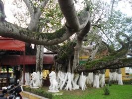 Cây cổ thụ nhất Việt Nam