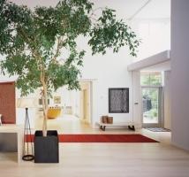 Cây cảnh có khả năng điều hòa không khí trong nhà tốt nhất