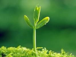 Bài văn tả một cây non mới trồng hay nhất