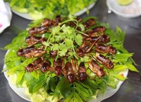 Món ăn từ côn trùng lạ nhất Việt Nam