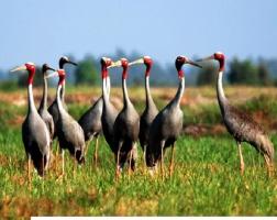 Loài chim quý hiếm nhất thế giới