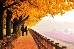 Con đường đẹp nhất Hàn Quốc