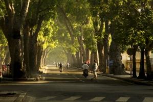 Con đường đẹp nhất ở Hà Nội để bạn đi lượn