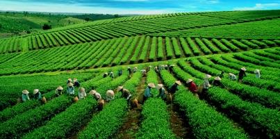 Công dụng của trà xanh tốt cho sức khỏe có thể bạn muốn biết