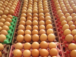 Công ty cung cấp trứng gia cầm sạch tại Việt Nam