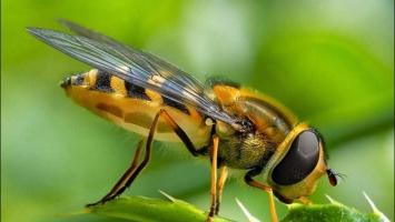 Công ty diệt côn trùng tại nhà ở TP. Hồ Chí Minh